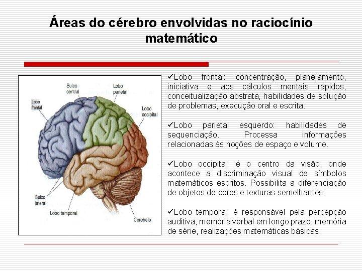 Áreas do cérebro envolvidas no raciocínio matemático üLobo frontal: concentração, planejamento, iniciativa e aos