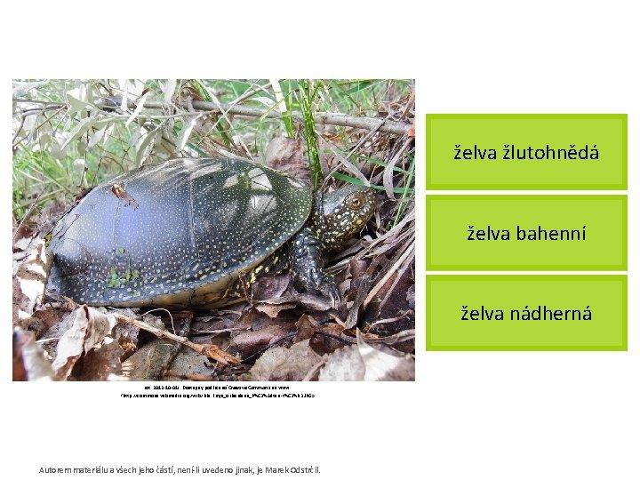 želva žlutohnědá želva bahenní želva nádherná [cit. 2012 -10 -01]. Dostupný pod licencí Creative