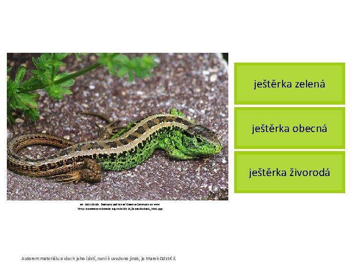 ještěrka zelená ještěrka obecná ještěrka živorodá [cit. 2012 -10 -01]. Dostupný pod licencí Creative