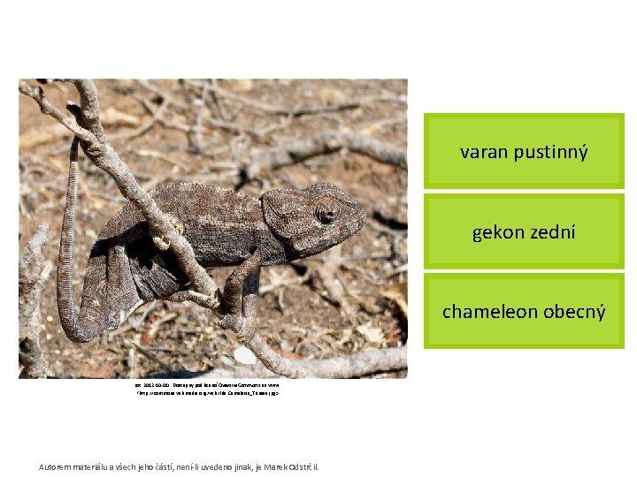 varan pustinný gekon zední chameleon obecný [cit. 2012 -10 -01]. Dostupný pod licencí Creative