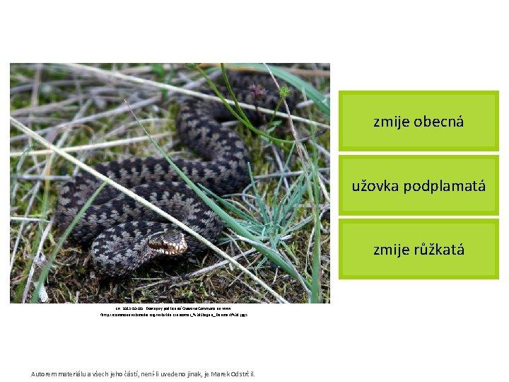 zmije obecná užovka podplamatá zmije růžkatá [cit. 2012 -10 -01]. Dostupný pod licencí Creative