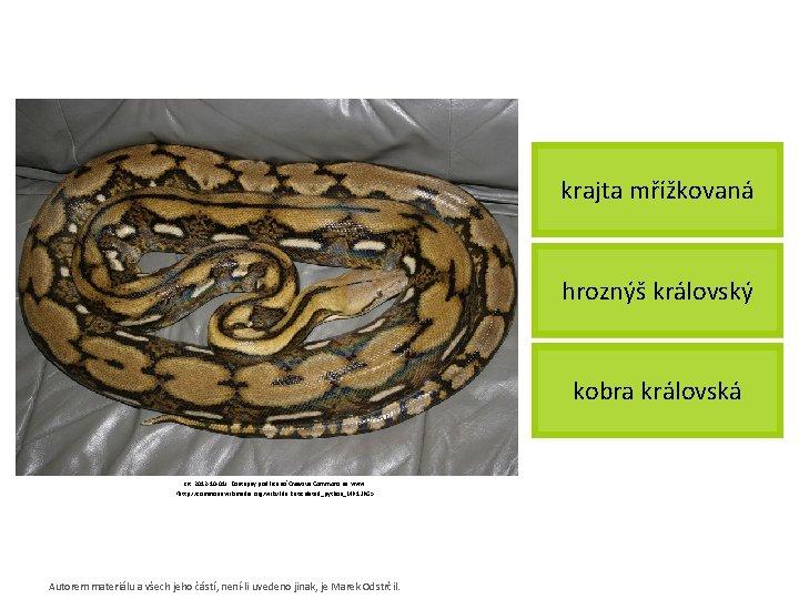 krajta mřížkovaná hroznýš královský kobra královská [cit. 2012 -10 -01]. Dostupný pod licencí Creative