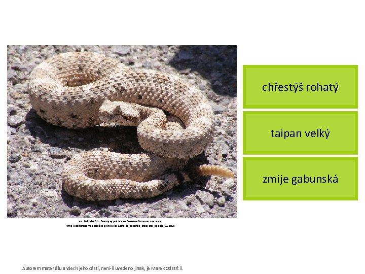 chřestýš rohatý taipan velký zmije gabunská [cit. 2012 -10 -01]. Dostupný pod licencí Creative