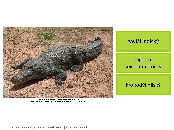 gaviál indický aligátor severoamerický krokodýl nilský [cit. 2012 -10 -01]. Dostupný pod licencí Creative