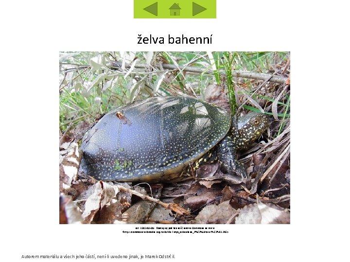 želva bahenní [cit. 2012 -10 -01]. Dostupný pod licencí Creative Commons na www: <http:
