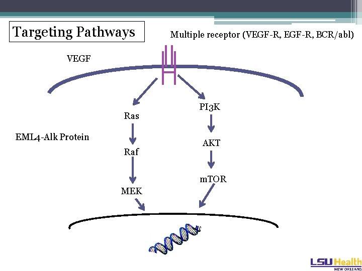 Targeting Pathways Multiple receptor (VEGF-R, BCR/abl) VEGF Ras EML 4 -Alk Protein Raf PI