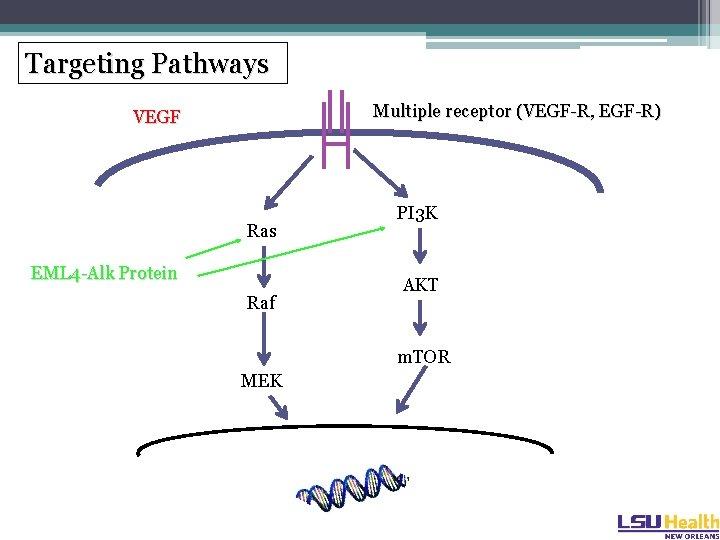 Targeting Pathways Multiple receptor (VEGF-R, EGF-R) VEGF Ras EML 4 -Alk Protein Raf PI
