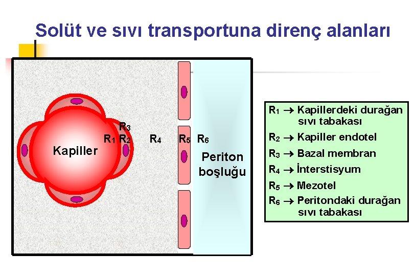 Solüt ve sıvı transportuna direnç alanları Kapiller R 3 R 1 R 2 R