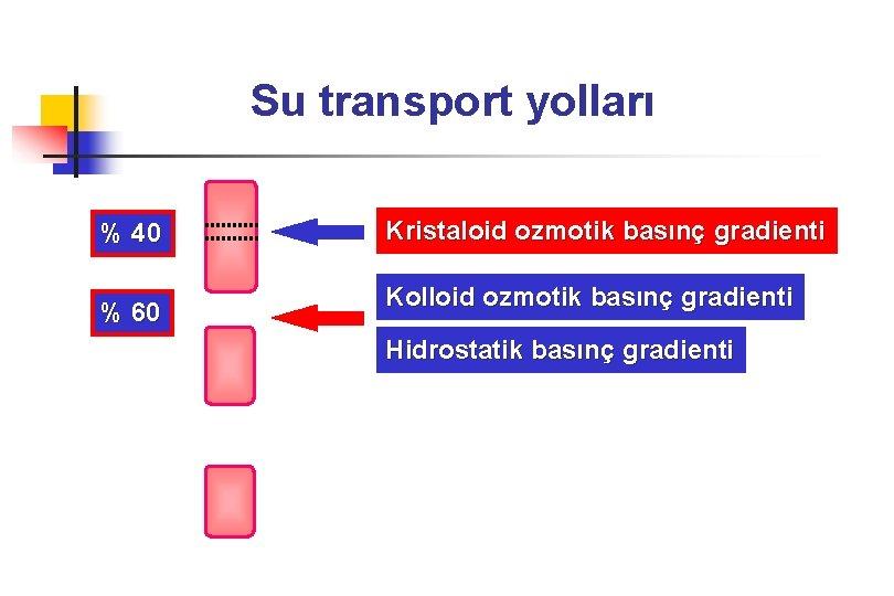 Su transport yolları % 40 % 60 Kristaloid ozmotik basınç gradienti Kolloid ozmotik basınç