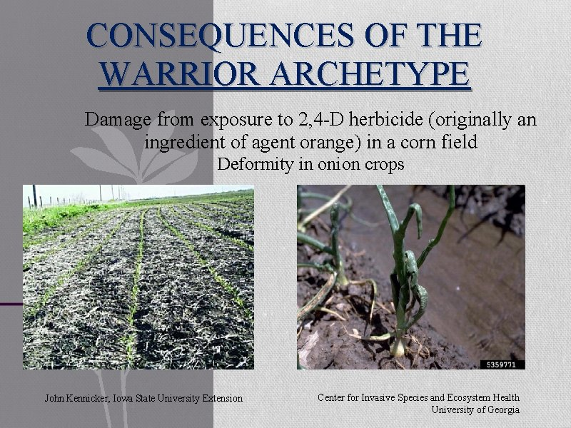 CONSEQUENCES OF THE WARRIOR ARCHETYPE Damage from exposure to 2, 4 -D herbicide (originally
