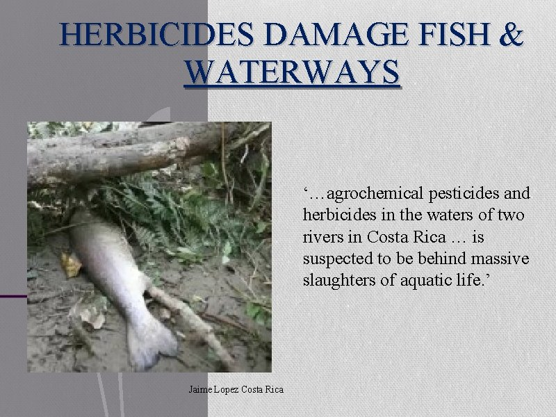 HERBICIDES DAMAGE FISH & WATERWAYS '…agrochemical pesticides and herbicides in the waters of two