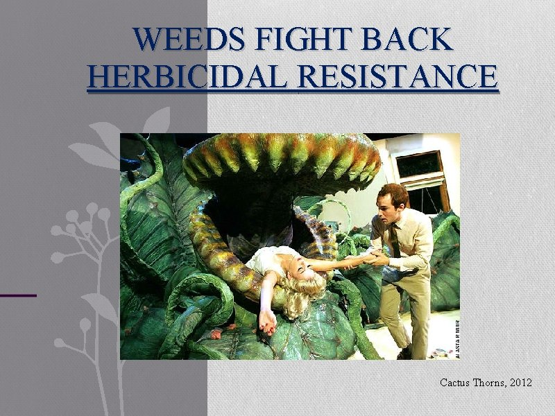 WEEDS FIGHT BACK HERBICIDAL RESISTANCE Cactus Thorns, 2012
