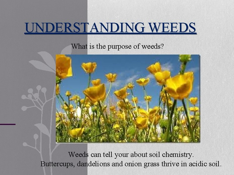 UNDERSTANDING WEEDS What is the purpose of weeds? Weeds can tell your about soil