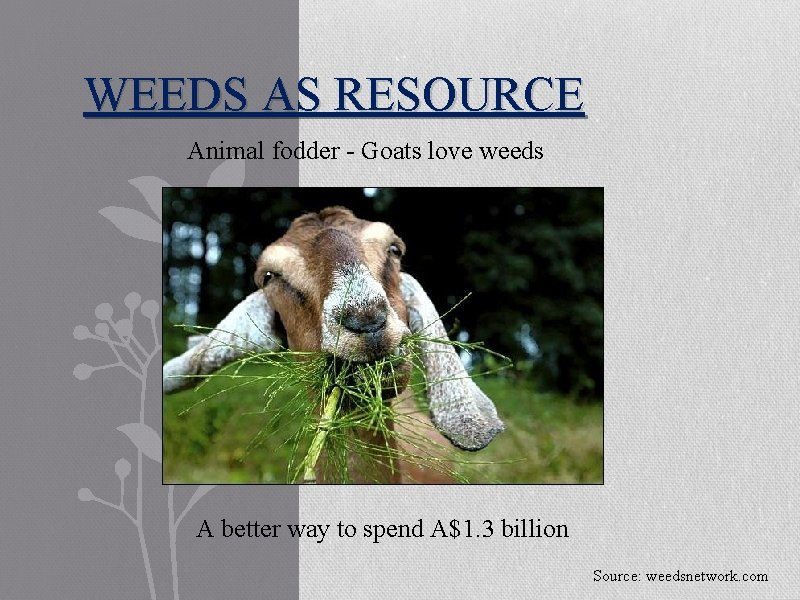 WEEDS AS RESOURCE Animal fodder - Goats love weeds A better way to spend
