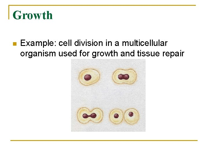 Growth n Example: cell division in a multicellular organism used for growth and tissue