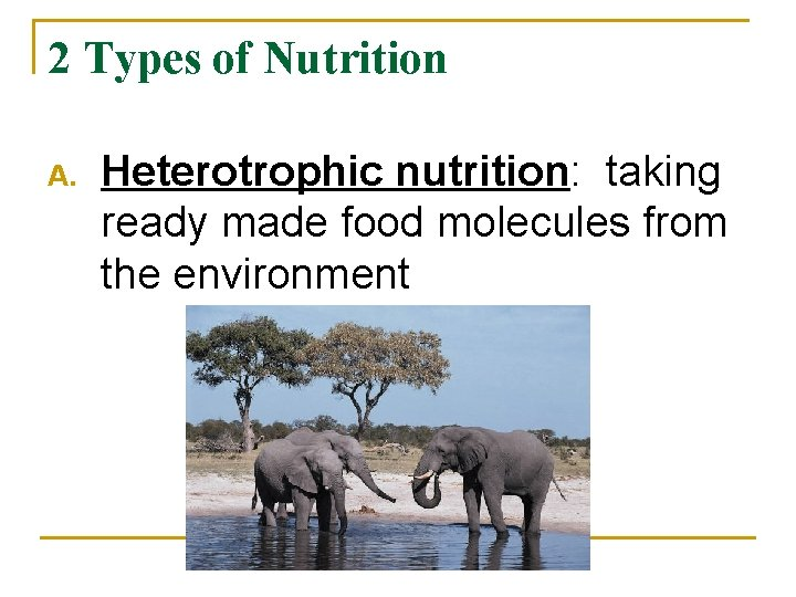2 Types of Nutrition A. Heterotrophic nutrition: taking ready made food molecules from the