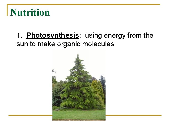 Nutrition 1. Photosynthesis: using energy from the sun to make organic molecules