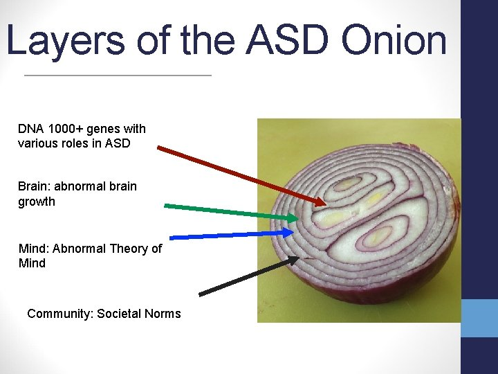 Layers of the ASD Onion DNA 1000+ genes with various roles in ASD Brain: