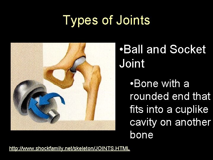 Types of Joints • Ball and Socket Joint • Bone with a rounded end