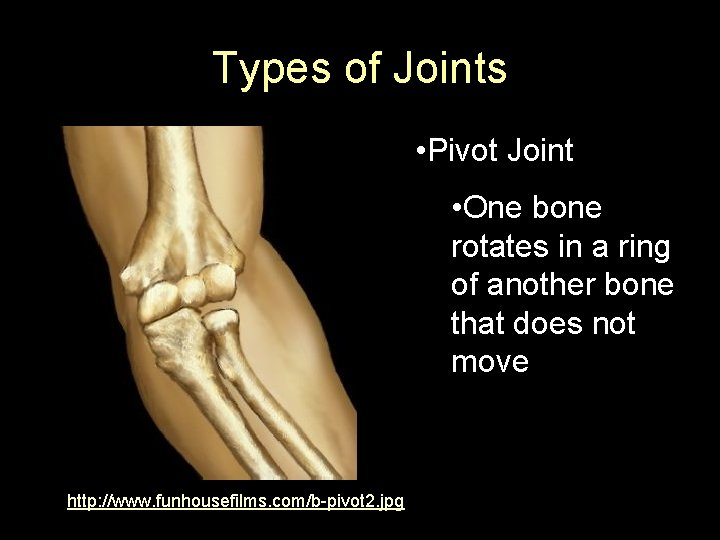 Types of Joints • Pivot Joint • One bone rotates in a ring of