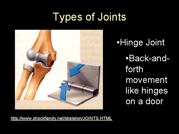 Types of Joints • Hinge Joint • Back-andforth movement like hinges on a door