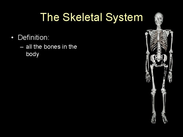 The Skeletal System • Definition: – all the bones in the body