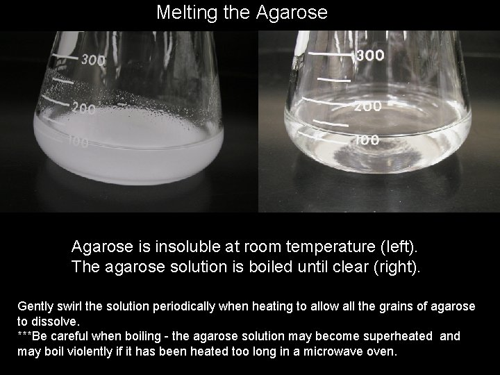 Melting the Agarose is insoluble at room temperature (left). The agarose solution is boiled