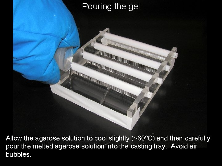 Pouring the gel Allow the agarose solution to cool slightly (~60ºC) and then carefully
