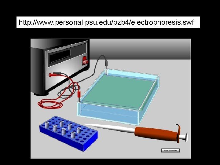 http: //www. personal. psu. edu/pzb 4/electrophoresis. swf