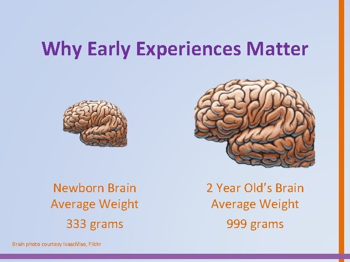 Why Early Experiences Matter Newborn Brain Average Weight 333 grams Brain photo courtesy Isaac.