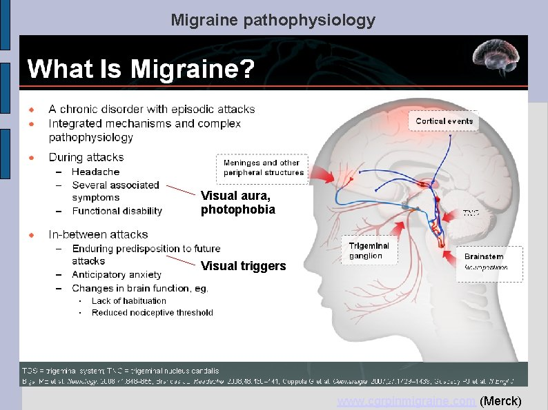 Migraine pathophysiology- cortical excitability Visual aura, photophobia Visual triggers www. cgrpinmigraine. com (Merck)