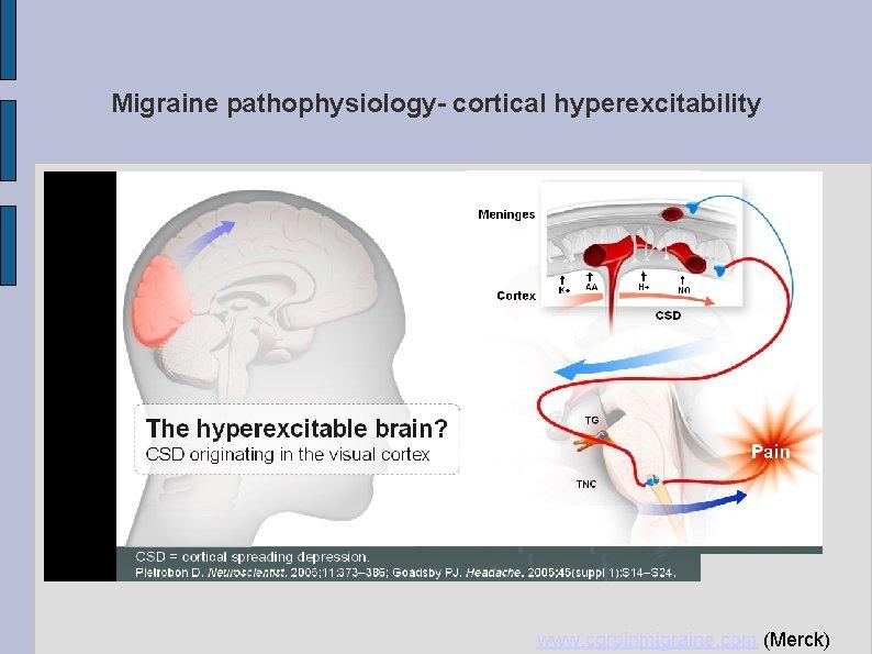 Migraine pathophysiology- cortical hyperexcitability www. cgrpinmigraine. com (Merck)