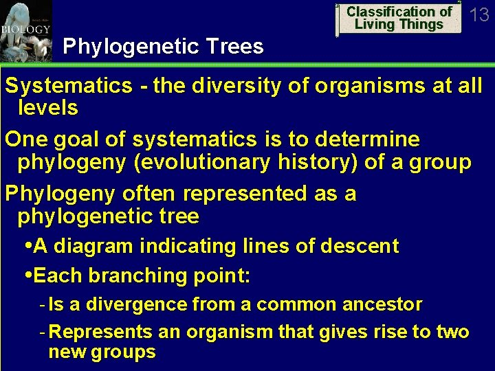 Classification of Living Things 13 Phylogenetic Trees Systematics - the diversity of organisms at