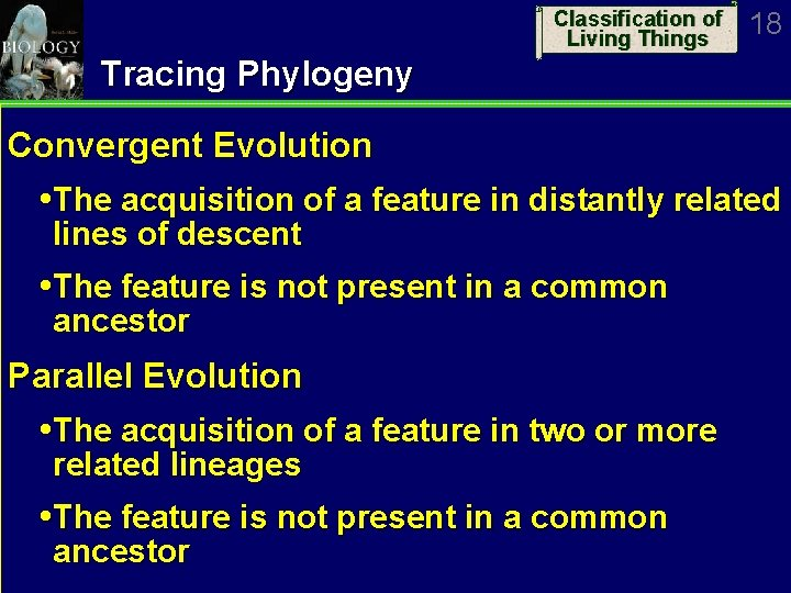 Classification of Living Things 18 Tracing Phylogeny Convergent Evolution The acquisition of a feature