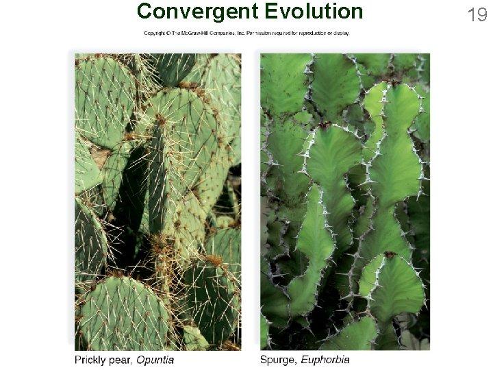 Convergent Evolution 19