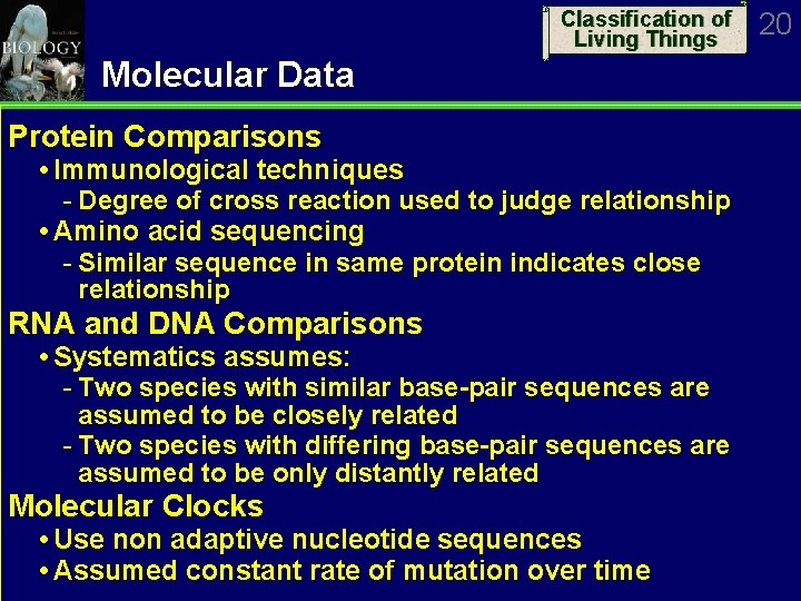 Classification of Living Things Molecular Data Protein Comparisons Immunological techniques Degree of cross reaction