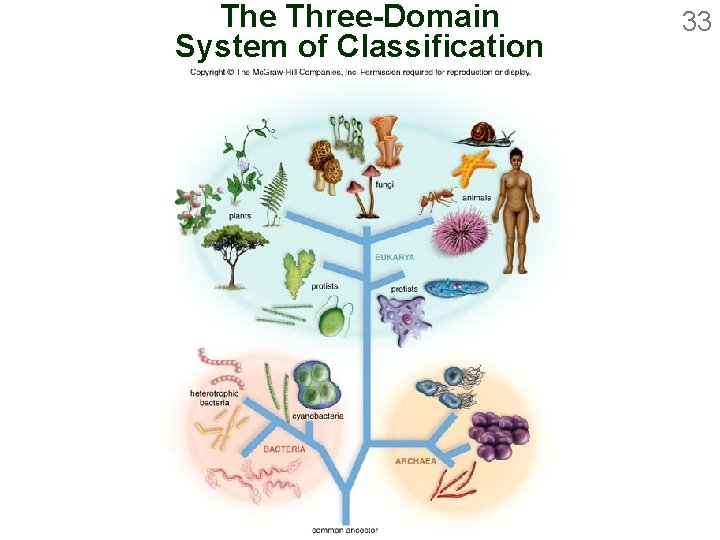 The Three-Domain System of Classification 33