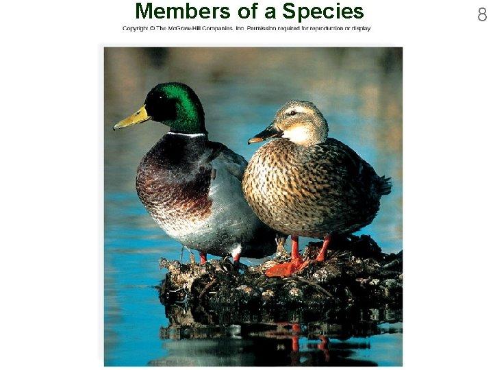 Members of a Species 8