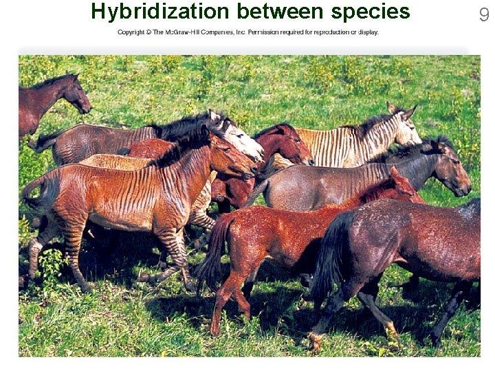 Hybridization between species 9