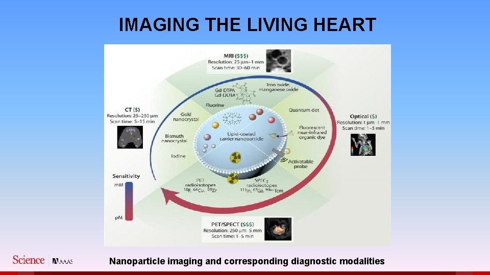 IMAGING THE LIVING HEART Nanoparticle imaging and corresponding diagnostic modalities