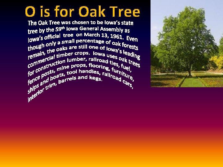 O is for Oak Tree
