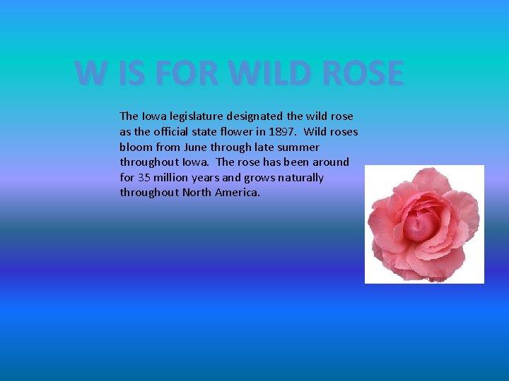 W IS FOR WILD ROSE The Iowa legislature designated the wild rose as the