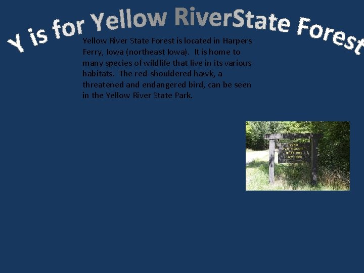 Yellow River State Forest is located in Harpers Ferry, Iowa (northeast Iowa). It is