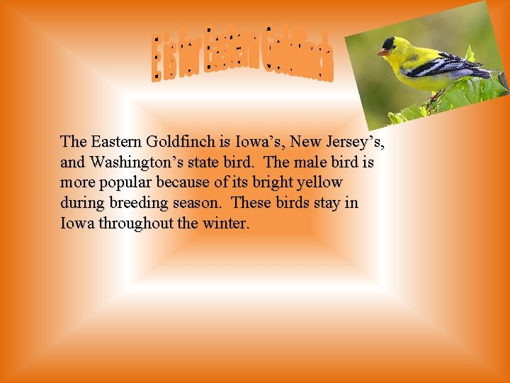 The Eastern Goldfinch is Iowa's, New Jersey's, and Washington's state bird. The male bird