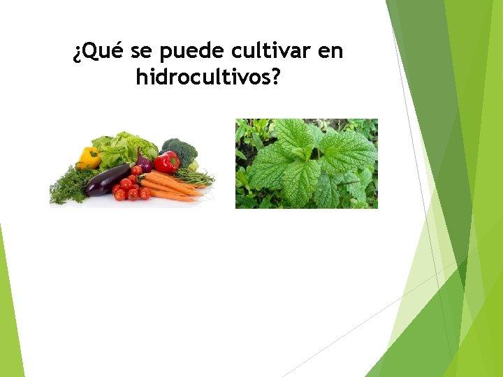 ¿Qué se puede cultivar en hidrocultivos?