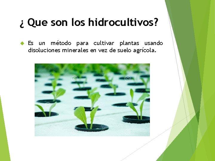 ¿ Que son los hidrocultivos? Es un método para cultivar plantas usando disoluciones minerales