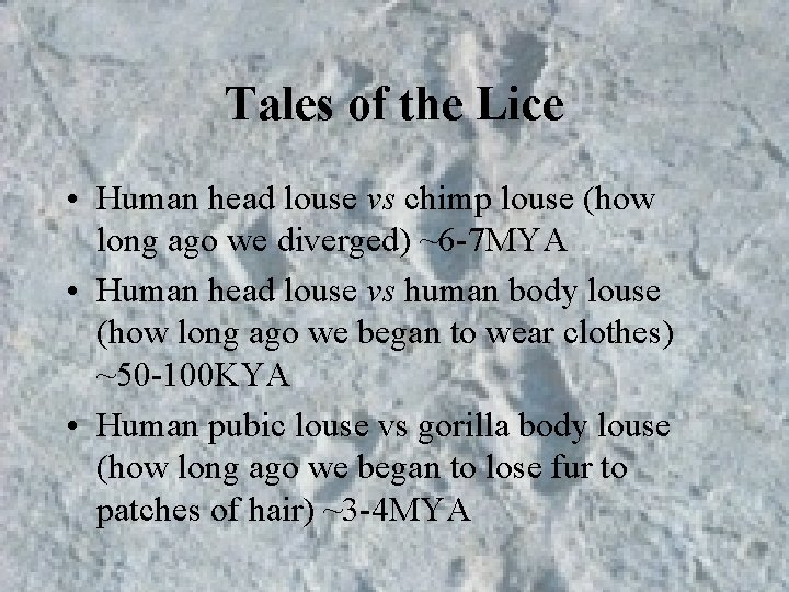 Tales of the Lice • Human head louse vs chimp louse (how long ago