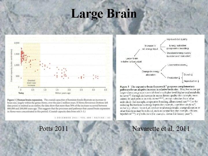 Large Brain Potts 2011 Navarette et al. 2011