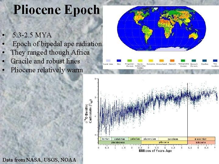 Pliocene Epoch • 5. 3 -2. 5 MYA • Epoch of bipedal ape radiation.