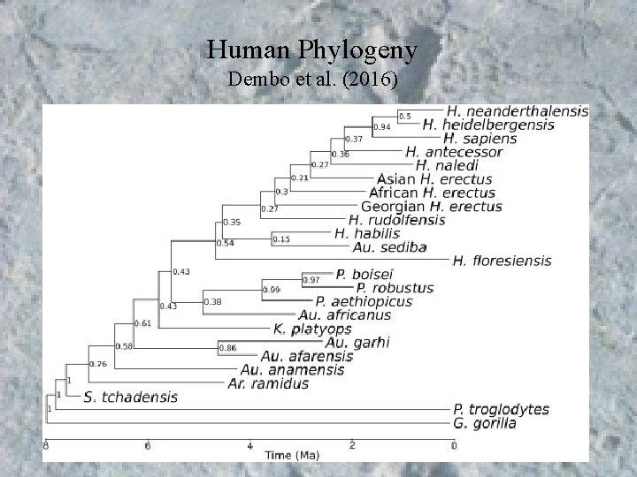 Human Phylogeny Dembo et al. (2016)